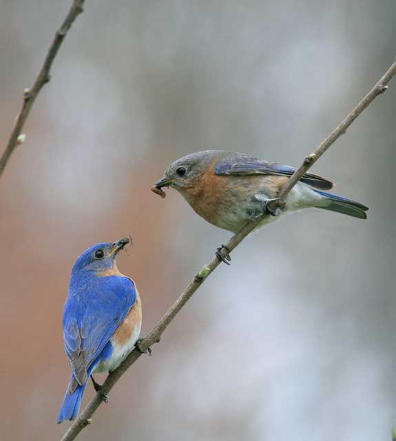 Big Mill B&B in Eastern North Carolina is a feast for bird lovers