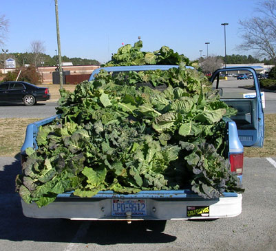 Eastern North Carolina collards for sale