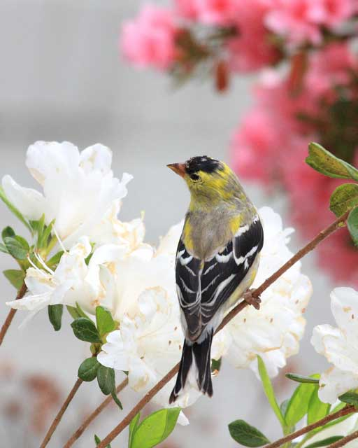 Birders love the variety at Big Mill Bed & Breakfast in eastern North Carolina