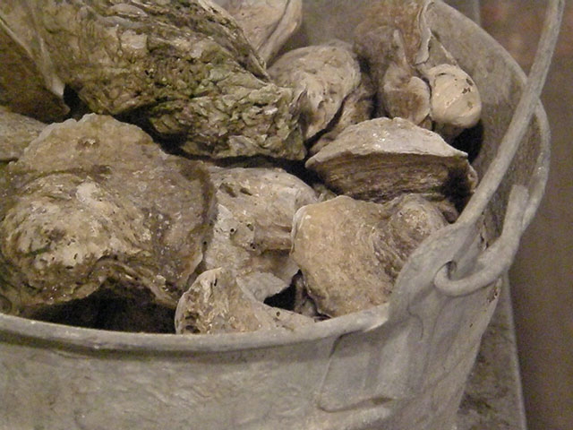 Oyster Shells are Recycled
