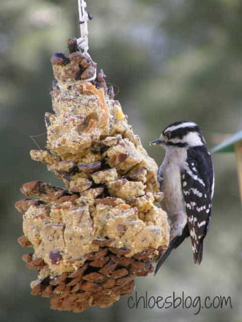 Birds at Big Mill love our Suet