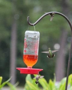 Hummingbird nectar Recipe from innkeeper at Big Mill B&B | chloesblog.com