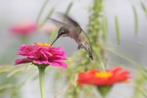 Hummingbird at Big Mill taken by Guy Livesay | chloesblog.com