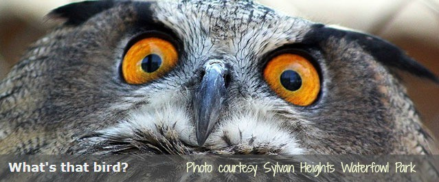 See owls and endangered birds at Sylvan Heights Waterfowl Park near bigmill.com