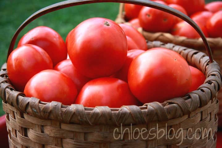 Fresh tomatoes from the garden at Big Mill B&B near Greenville, NC