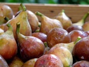 Figs are an Eastern North Carolina delight and guests love the fig preserves recipe from Big Mill Bed and Breakfast in Williamston, NC
